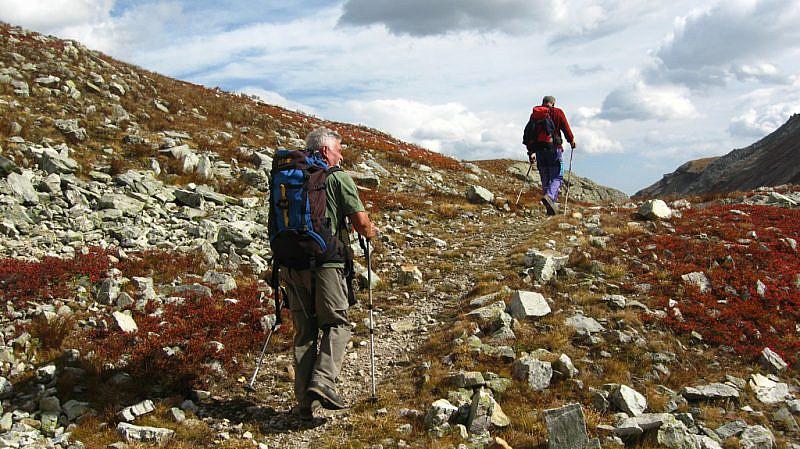 In salita nella Val Fissela tra cespugli di mirtilli