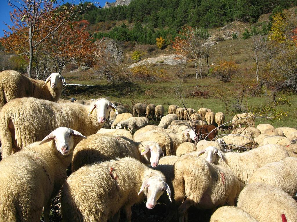 Sentiero delle Pecore