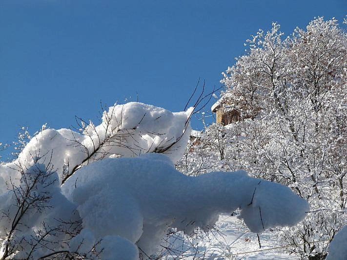 Cotone o fiocchi di neve?