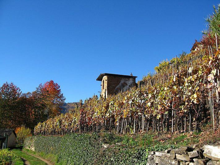 Colline di Costalunga in autunno