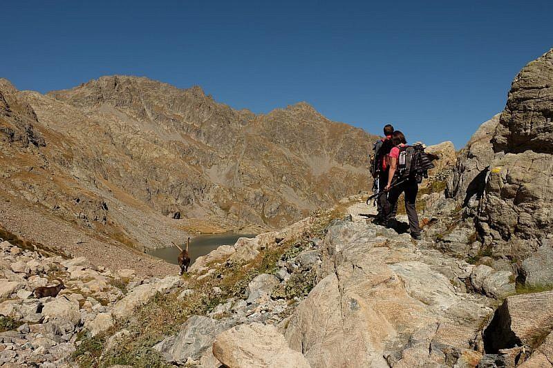 Stambecchi a valle del sentiero poco prima del lac Noir
