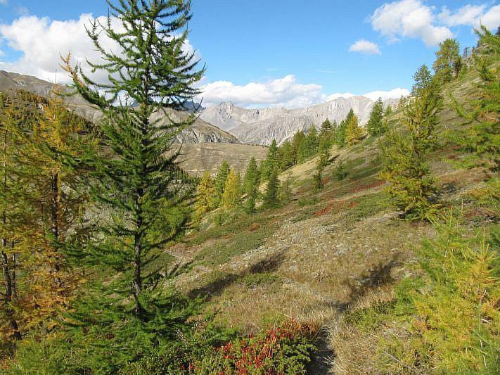 L'autunno nei larici scendendo verso il vallone Forneris