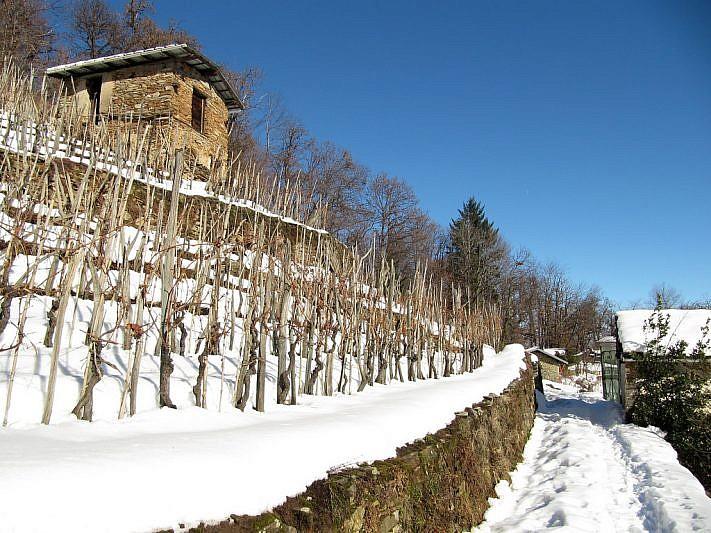Le vigne di Costalunga