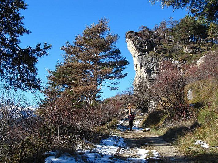 Un albero infestato dai nidi della Processionaria dei pini
