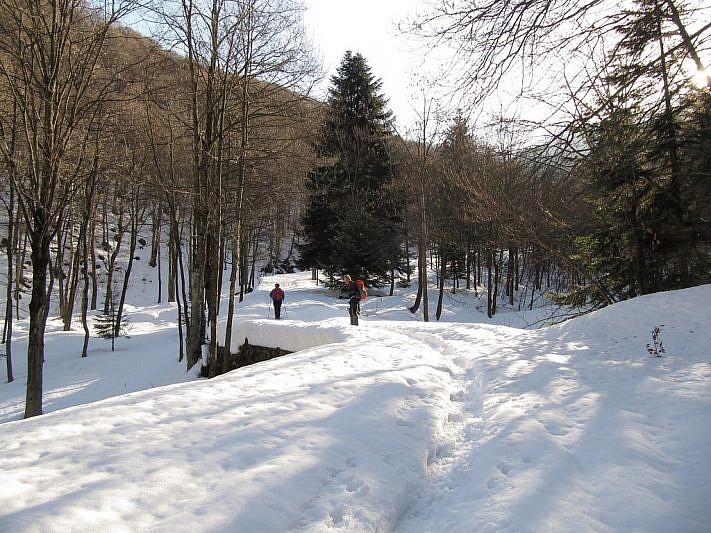 In cammino sulla pista forestale
