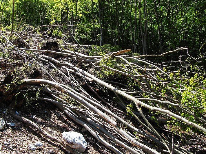 I tronchi spezzati dalla valanga, attraverso cui dobbiamo farci strada