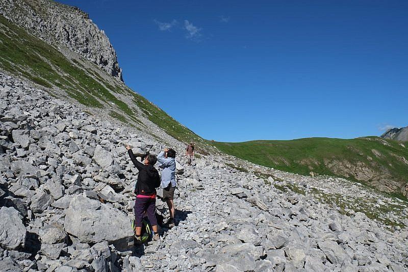 Osservando lo stambecco in alto sulle rocce