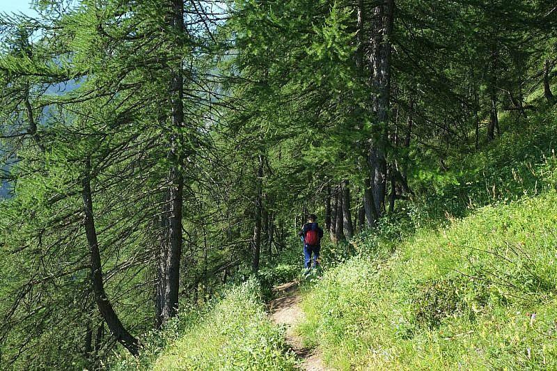 All'interno del bosco di conifere