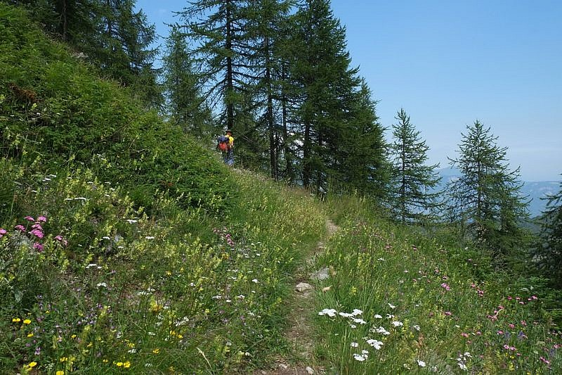 Ritorno verso l'interno del boschetto di conifere