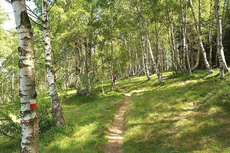 Sul bel sentiero di discesa nel bosco