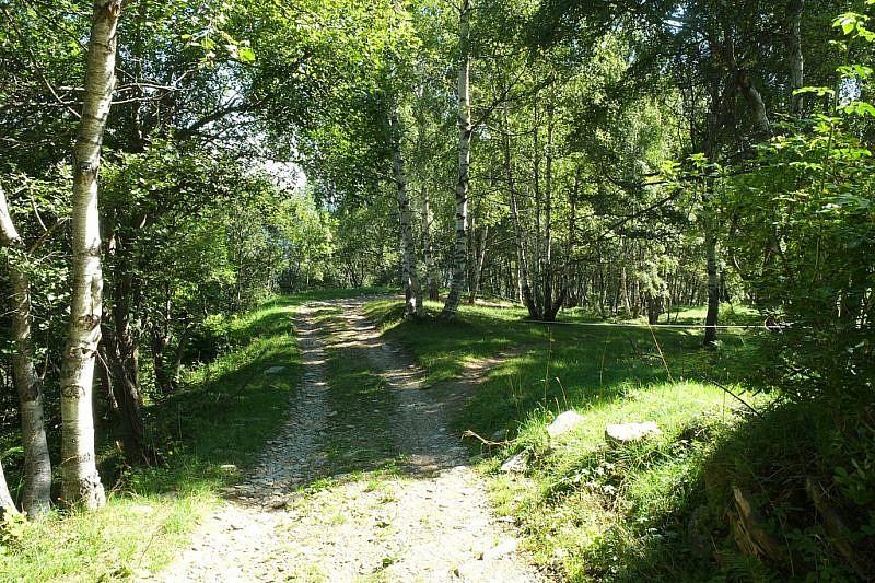 Verso il termine del bosco