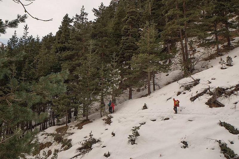 Contornando alcuni valloncelli si entra in pineta