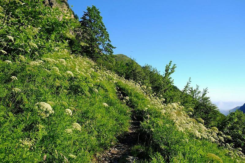 Il sentiero tra la folta vegetazione