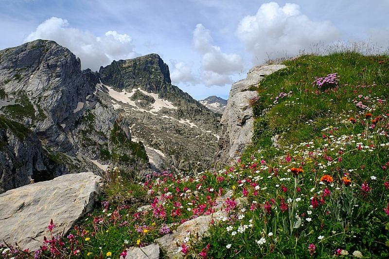 Biodiversità vegetale, salendo gli ultimi metri del Ciotto Mien