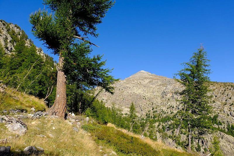 Il mont Bego traspare dai larici