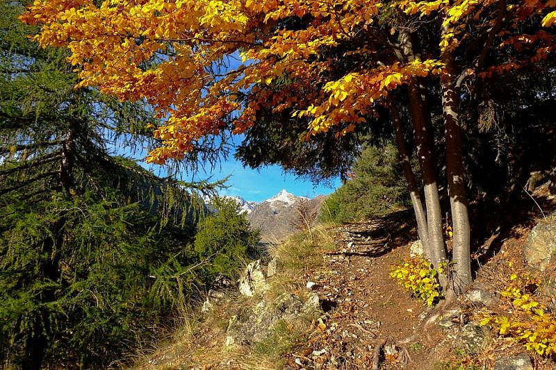 Il becco alto dell'Ischiator tra gli alberi