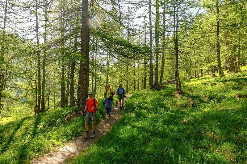 Il bel sentiero nel bosco di larici