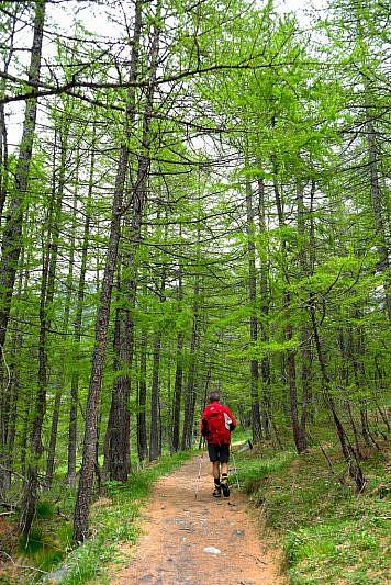 Ridiscendendo nel bosco di larici