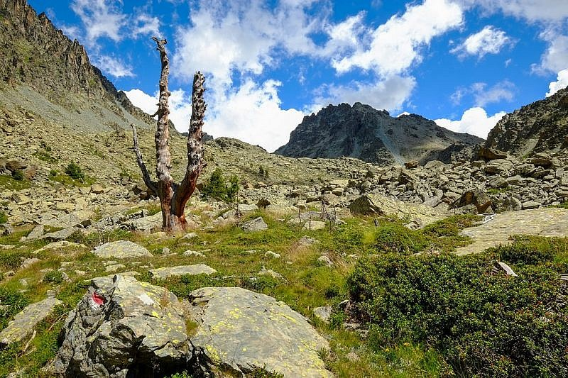 Scheletro di pino cembro sul sentiero di discesa
