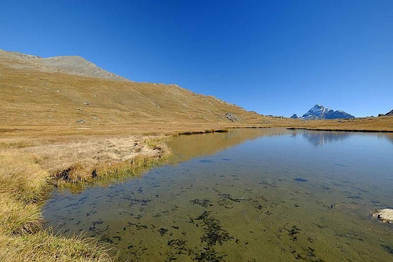 Monviso visto dal lac de Longet…