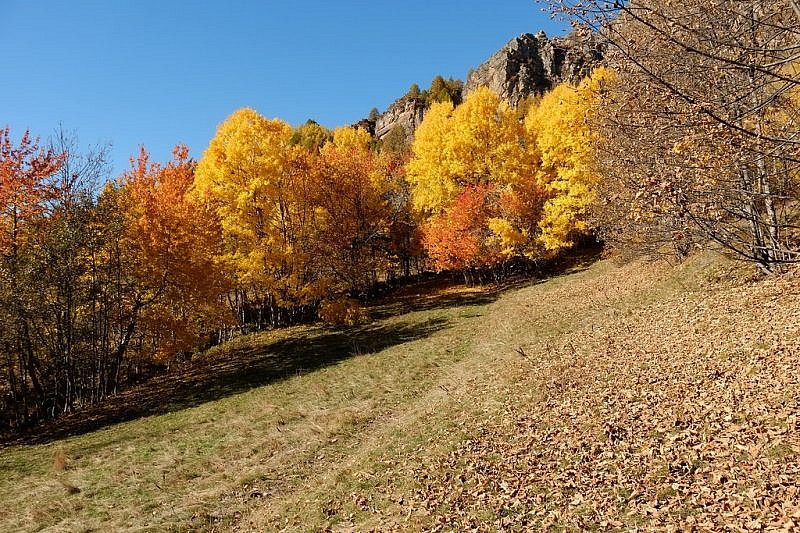 Immagini del foliage dal viale alberato