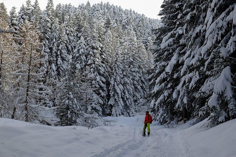 Nell'abetaia arabescata dalla neve