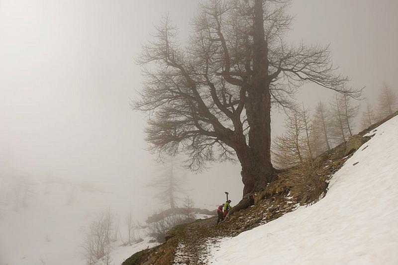 Merze Gros nuovamente nella nebbia
