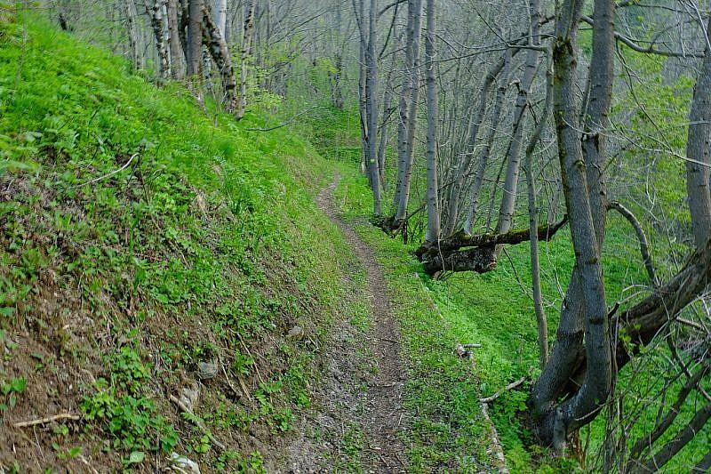 Il bel sentiero che si sviluppa tra i frassini