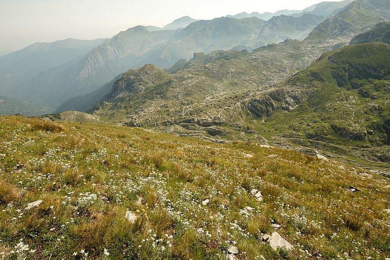 Milioni di stelle alpine sui prati contornanti la cima