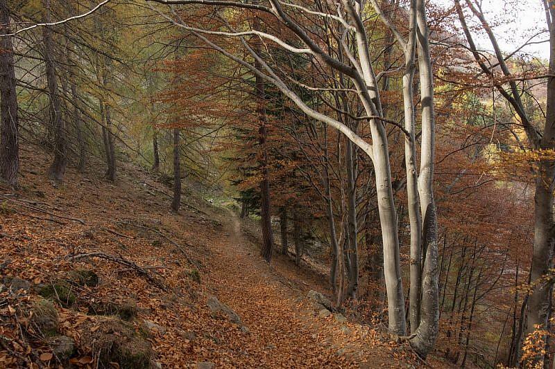 Nel bosco tra faggi e conifere tornando al Pinet
