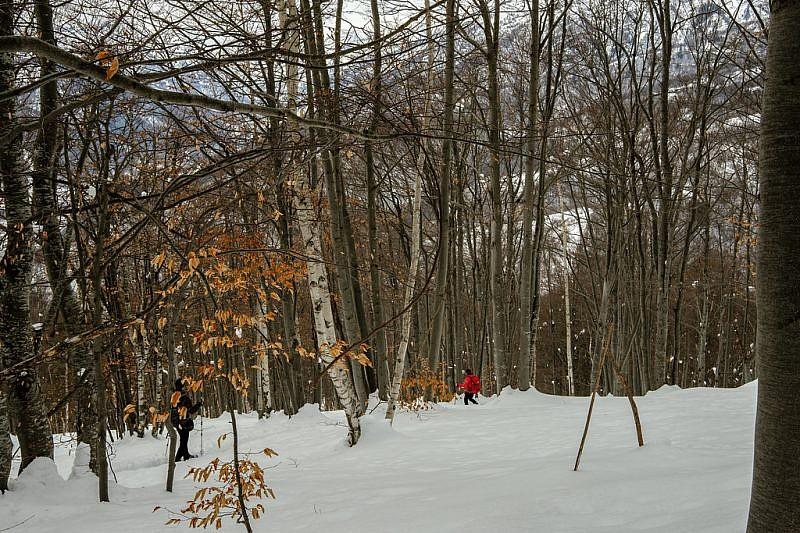 Discesa nel bosco…