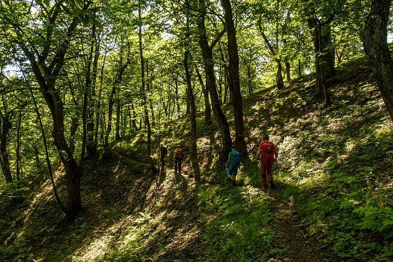 Passaggio nel bosco