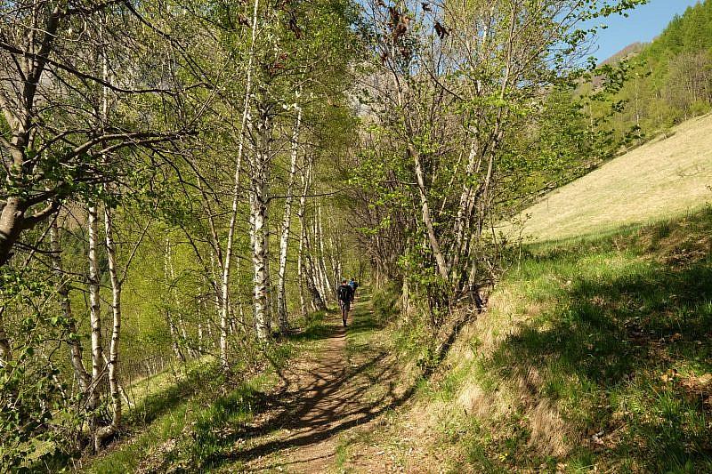 Il sentiero tra le betulle oltre forte Neghino
