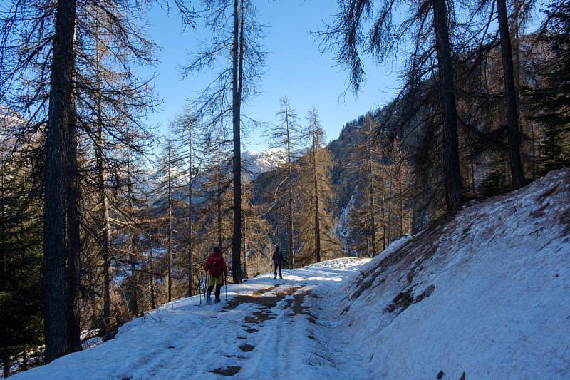 In discesa nella pista forestale
