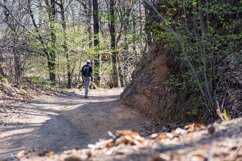 Via Costalunga nel bosco